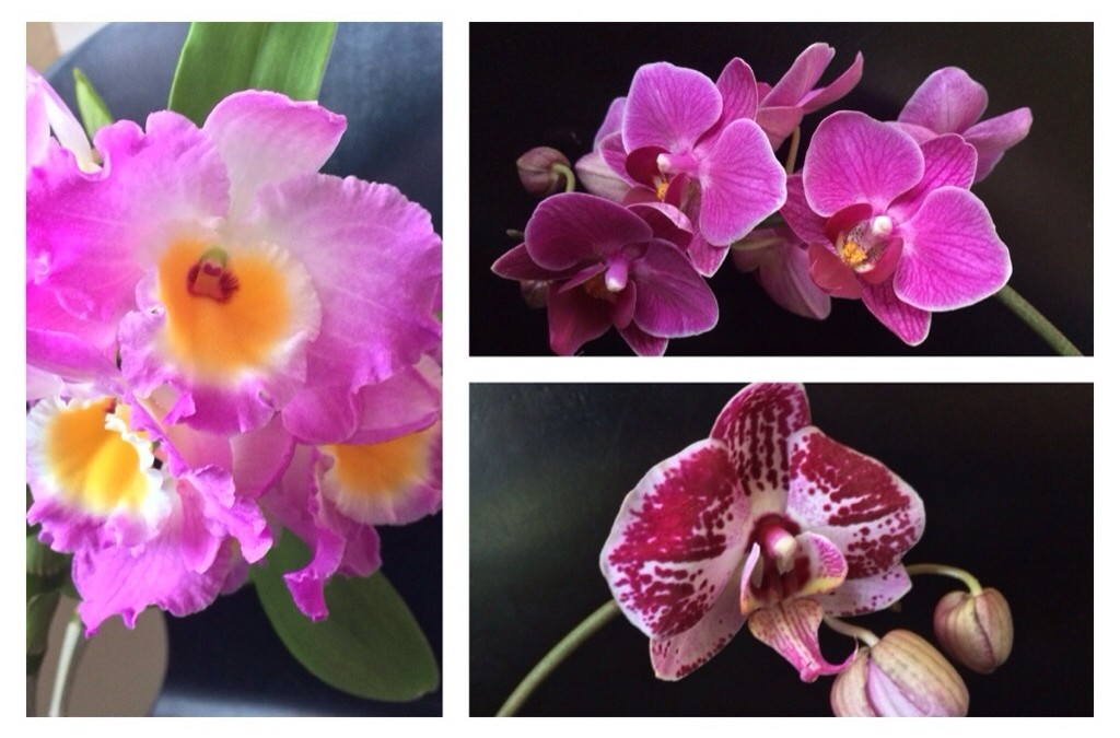 3 reasons not to toss those gift orchids
