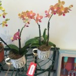 """I Garden Therefore I Am"" Orchid Mugs"